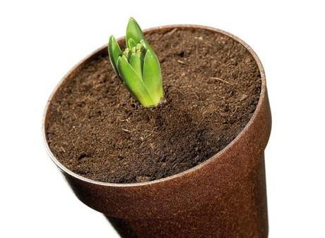 Origini i vasi biodegradabili fatti di legno liquido for Vasi di legno