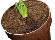Origini: vasi biodegradabili fatti Legno Liquido