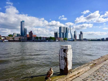 Erasmus Bridge Rotterdam cosa vedere