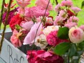 Conoscere rose peonie