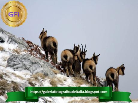 Il Parco Nazionale del Gran Sasso è una delle più grandi aree protette in Europa.