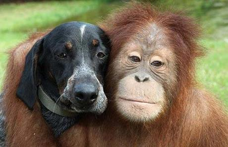 http://dogblog.dogster.com/uploads/2010/01/monkey-dog-8.jpg