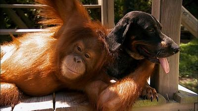 http://www.shallownation.com/wp-content/uploads/2009/09/National_Geographic_Unlikely_Animal_Friends_3.jpg