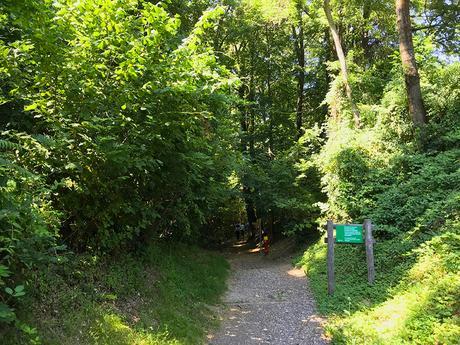 L'ingresso nel bosco in Via ai Canvetti