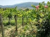 Abruzzo gusto blog tour