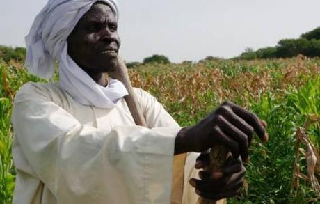 Ciad : una banca di cereali per sconfiggere usura e povertà