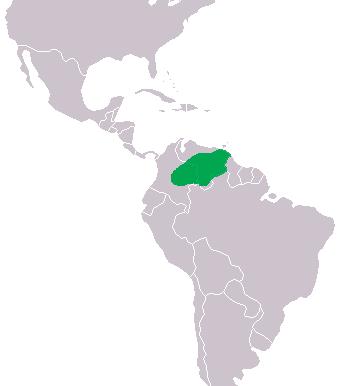 Non esistono in natura più di 1500 esemplari di coccodrillo dell'Orinoco.