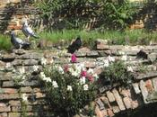 Mettete fiori vostri muri