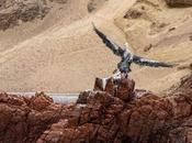 Islas Ballestas, Paracas, Perù pelican...