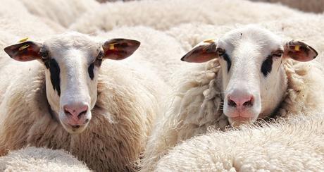 Un antico materiale sempre di moda: la lana