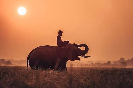 Elefante Cambogia