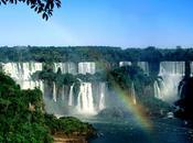Salviamo l'Amazzonia!