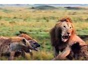 leone iene