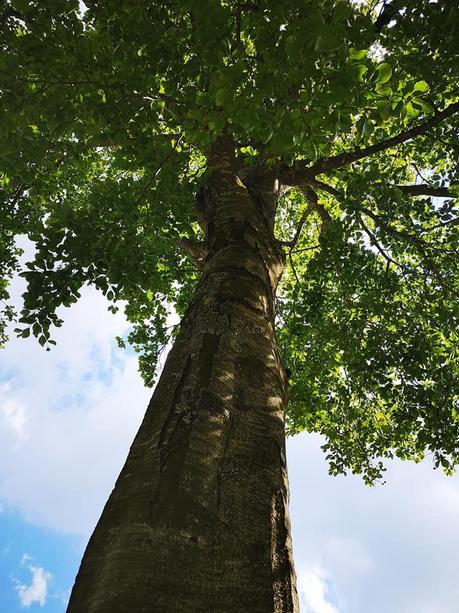L'immagine può contenere: albero, cielo, pianta, nuvola, spazio all'aperto e natura