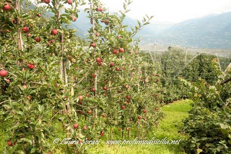 Vacanza in Sud-Tirolo per la nostra Estate 2019