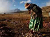Chuño, patate liofilizzate degli Inca