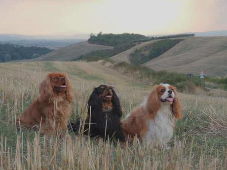 Scendi il cane che lo piscio: DEVOURMENT – Obscene Majesty