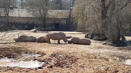 Zoo-safari di Dvur Kralove: un tocco d'Africa alle pendici dei Monti dei Giganti