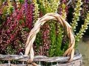 piante belle balcone: idee consigli