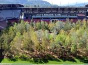 Forest Klagenfurt: ammirare foresta nello stadio