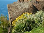 Piante esotiche naturalizzate Sardegna