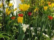Ricette bulbi fiore