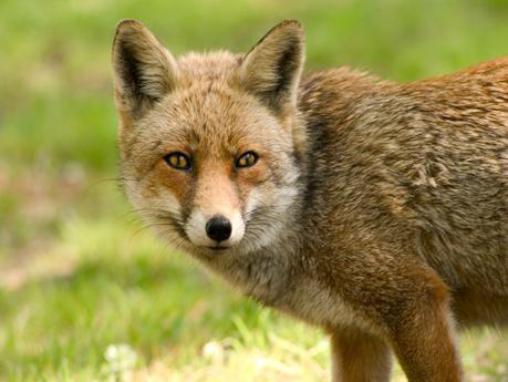 La fauna del parco appennino-lucano, vasto sistema di aree protette.
