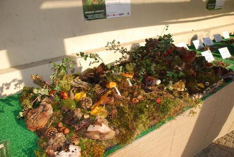 I segreti dei funghi in mostra sabato 26 e domenica 27 ottobre al Borgo medioevale di Torino
