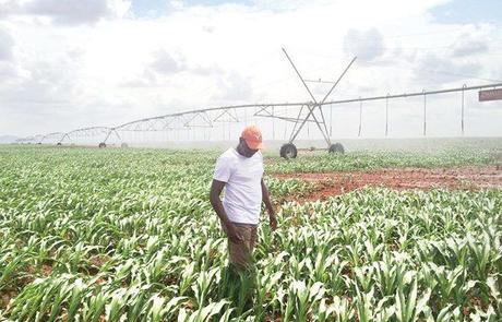 Risultati immagini per prodotti agricoltura del kenya