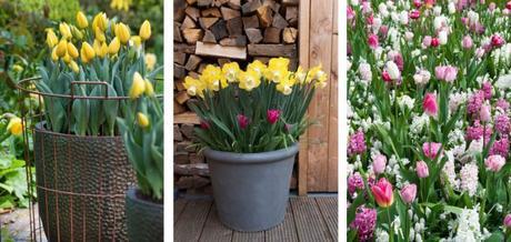 Abbelliamo il giardino con i bulbi da fiore