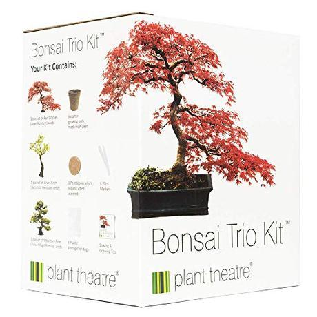 Plant Theatre – Bonsai Trio, Kit per la Coltivazione di 3 Bonsai