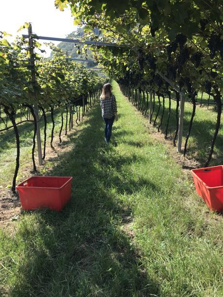 Weekend in Trentino: 4 esperienze enogastronomiche in Vallagarina