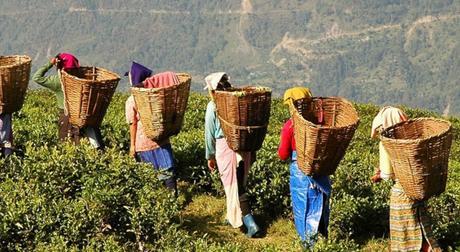I 10 maggiori paesi produttori di tè del mondo
