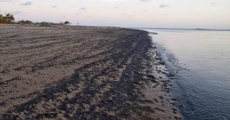 Risultati immagini per greggio sulle coste brasiliane