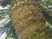 L'isola delle cicadine
