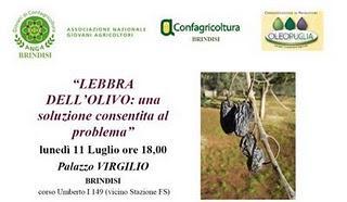 E' solo grazie al Dottore Agronomo Antonio Guario che c'è la possibilità di combattere la lebbra dell'olivo
