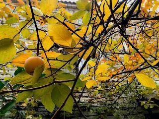autunnovembre