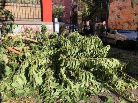 vento napoli albero caduto