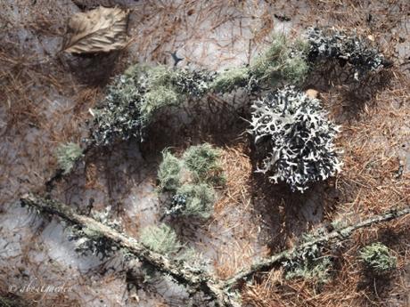 cosa fare con i licheni