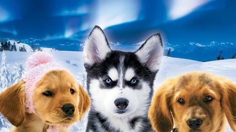 [Snow Buddies. Supercuccioli sulla neve] streaming ita [2008] film completo GUARDA