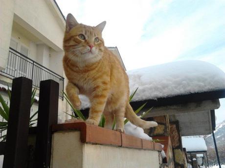 Giornata del gatto, si celebra oggi 17 febbraio la festa degli animali più popolari del web