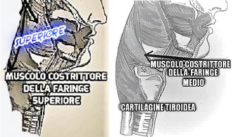 Marco Gaudino – Muscoli vocali e respiratori nella produzione del suono negli strumenti a fiato