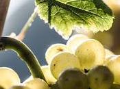 Pinot Bianco secondo Nals Margreid. varietà locale nasce grande vino carattere internazionale.
