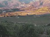 migliori vini Mediterraneo, seconda puntata