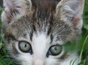 Lega Nord Friuli vuole uccidere cani gatti