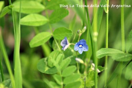 L'eterna bellezza dei fiori selvatici