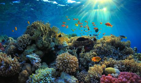 OCEANI IN SALUTE ENTRO IL 2050:  SOLO CON UNA PESCA SOSTENIBILE