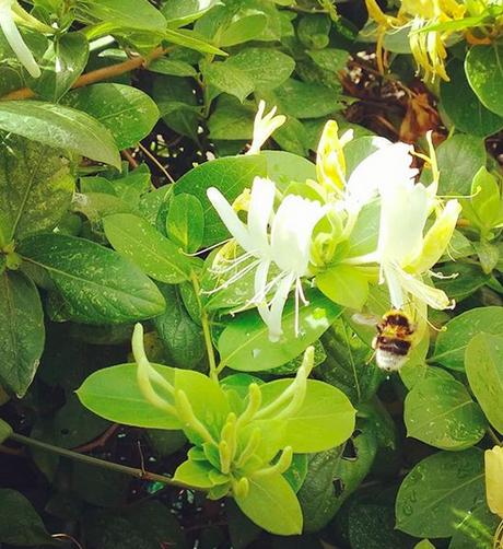 Giornata mondiale delle api: come aiutarle (anche grazie ai nostri bambini)