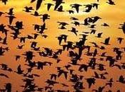 Ornitologia Italia. Siamo paese falchi, delle colombe, paduli class-action
