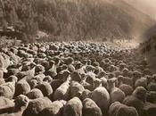 Perdita Possesso dell'auto Dogana delle Pecore